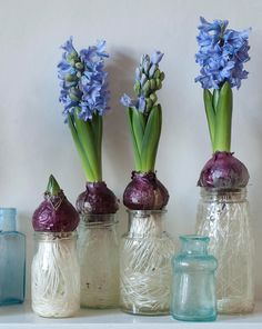 London, U.K.-based author and green thumb Emma Hardy shares an easy DIY project from her latest book, The Winter Garden (Cico Books, $20), to help you bring color and foliage into your home over the colder months. I love the simplicity of these hyacinths, requiring just a bulb, glass jar, and water. They provide you …