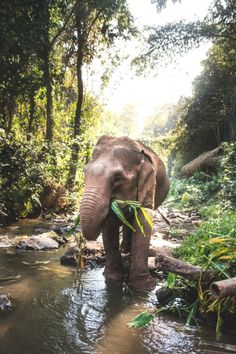 lsleofskye: Toto Elephant Sanctuary, Chiang Mai, Thailand (Link for location) Thailand Travel, Asia Travel, Elephant Sanctuary Chiang Mai, Thailand Elephants, Chiang Mai Thailand, Elephant Love, Gentle Giant, Wonders Of The World, Mystic