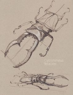 Warrior Spirit, Artist Heart: Dynamic Sketching with Peter Han