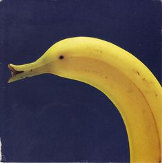 Banana Duck by whinendine  #Banana #Photography #whinendine