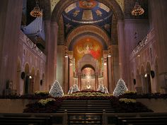 Christmas trees at the Basilica of the National Shrine of the Immaculate Conception, Washington, DC