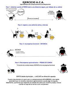 Etología Familiar: Cómo pasear con un perro reactivo: ejercicios B.A.T.