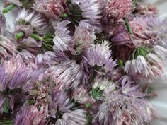 The Herb Gardener: Chive Vinegar Recipe and Instructions Chive Blossom, Herbal Oil, Vegetable Recipes, Vinegar, Herbalism, Herbs, Preserves, Grow Chives, Food Tips
