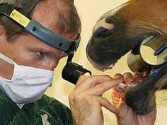 7 Things You Need to Know About Equine Dentistry