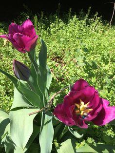 Comienzo de la primavera