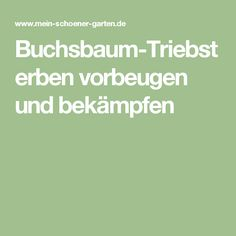 Buchsbaum-Triebsterben vorbeugen und bekämpfen