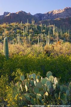 Sabino Canyon, Tucson, Arizona. www.arizonasunshinetours.com Let's GO! (PS: This is an AWESOME experience up in the Santa Catalina Mountains surrounding the city of #TUCSON by dixie
