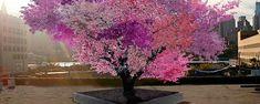 L'étonnant arbre aux 40 fruits