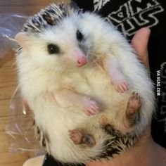 Does anyone want some hedgehog belly?