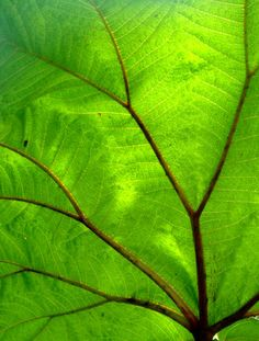 grünes Blatt / green leaf