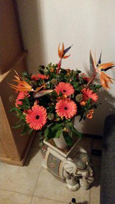 A typical Dutch bouquet (orange)