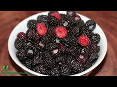 Black Raspberries versus Oral Cancer:  Black raspberries may cause complete clinical regression of precancerous oral lesions (oral intraepithelial neoplasia). Volume 13, Number 14. Released May 17th, 2013.