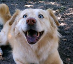 And this dog who is just happy with everything. | The 33 Most Joyous Things That Have Ever Happened