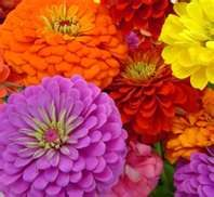 As a kid we would make Zinnia ladies.  Turn a large one upside down...stick the stem of a smaller one in the stem of the larger one.  The top one is the lady's hat and the bottom one is the dress.  Tie clovers around the middle for arms.