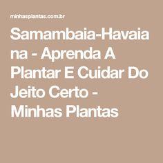 Samambaia-Havaiana - Aprenda A Plantar E Cuidar Do Jeito Certo - Minhas Plantas
