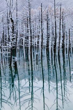 Frosty reflections, Winter, beauty of Nature, water, lines, peaceful, stunning, photo