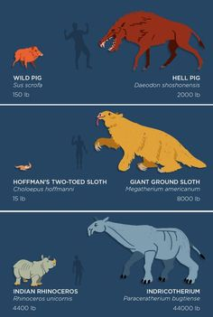 Skunk Bear The past is packed with monsters! Behemoths by the... : NPR: