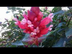 Have a whoooohooooo day! May 5, Make It Yourself, Garden, Plants, Garten, Lawn And Garden, Gardens, Plant, Gardening