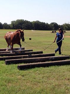 Horse obstacles