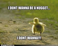 Funny Animal Pictures With Captions ... Forums • View topic - Cute Animals That Are Not Dogs Or Cats #cuteanimals
