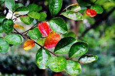 botanischer_Garten_Rom_herzanhirn Herbst