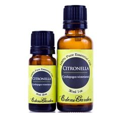 In addition to its use against mosquitoes and other pesky insects, Citronella is commonly used in soaps, detergents and cleaning products. Not only that, but Citronella is also incredibly calming. Lemongrass Oil, Lemongrass Essential Oil, Essential Oil Uses, Citronella Oil Uses, Natural Oils, Natural Healing, Natural Face, Cerca Natural, Home Remedies