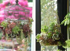 6 maneiras de decorar a casa com suculentas