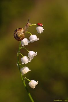 Snail and Ladybug by Jan Siwmir                                                                                                                                                                                 More