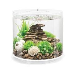 Tucker Murphy™ Pet Alan 20 Gallon Tower Square Aquarium Tank | Wayfair Acrylic Aquarium, Aquarium Kit, Betta Aquarium, Glass Aquarium, Nature Aquarium, Aquarium Design, Planted Aquarium, Beta Fish, Tanked Aquariums