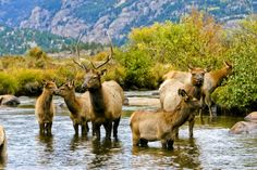Elk Fest in Estes Park, CO. Oct 4 - 5, 2014. Named one of the Top 10 Wildlife Festivals in Colorado in 2014. By 10Best.com