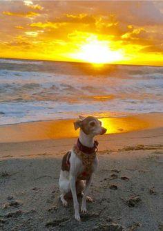 Florida beach time