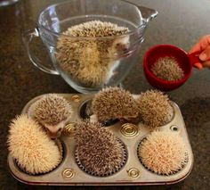animal-factbook:  Unlike most animals that are born through the process of reproduction, hedgehogs are actually created by following a very elaborate recipe. Although we can't give out too many specifics, the recipe does call for a sprinkle of adorableness, a dash of sassiness, and a pinch of cleverness.