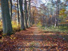 Één van onze bossen waar je een rustige wandeling kan gaan maken