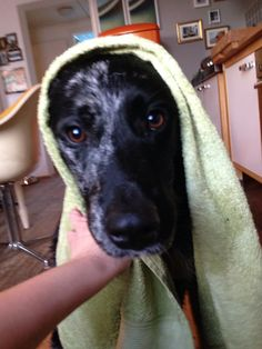 #washing#cute #funny #washday #dog