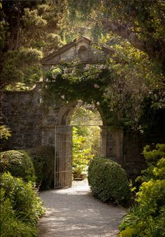 Garden in Garinish Island, Glengarriff, Co. Cork, Ireland - by Clare Wilson