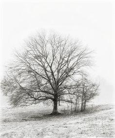 Photographic Art Image