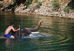 Forget swimming with the dolphins-swim with the elephants in Thailand