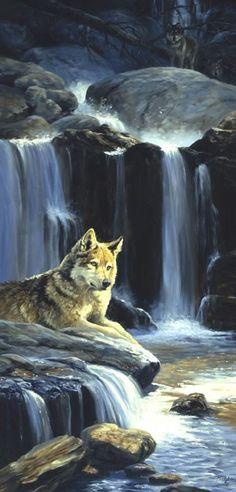 peintures de loup