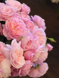Rose Farm KEIJI | ばら作家、國枝啓司が生み出す「和ばら」を栽培するばら園