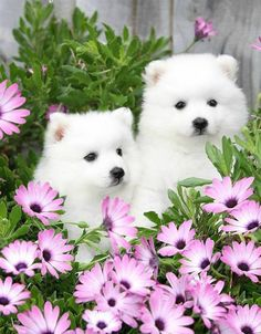 ❤️️️Cutest Dogs and Puppies