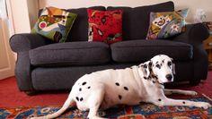 Kathy's dog, Spotty keeping guard of the Sligo sofa in Slate highland tweed in West Yorkshire http://www.sofa.com/