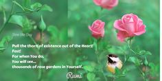 Pull the thorn of #existence out of the #Heart! Fast! For when You do, You will see... thousands of #rose #gardens in Yourself.#Rumi #Rumiquote #Love #Vesna