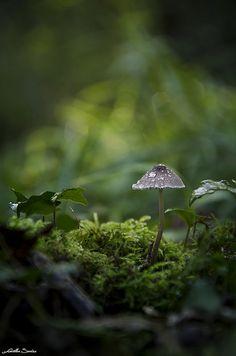 mushroom + moss #nature