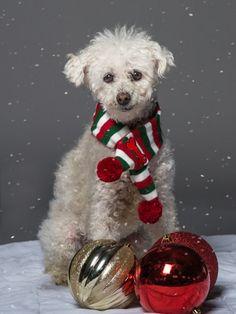 Holiday Pet Portraits & Snowy Gray Skies | Darlene Woodward Best Dog Food, Best Dogs, Animal Photography, Photography Ideas, Grey Skies, Pet Portraits, Dog Lovers, Photoshoot, Gray