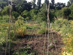 Our allotment in early July
