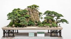 Bonsais landscapeART AND IDEAS : More At FOSTERGINGER @ Pinterest ㊙️㊗️