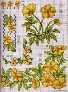 Gallery.ru / Фото #97 - Ботаника-цветы - irislena