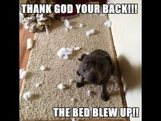 Anyone who knows Staffies will know this...