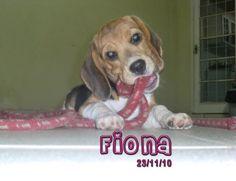 Fiona bebezona!