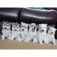 The gangs all here! What would you guys name these puppies? Let me know in the…